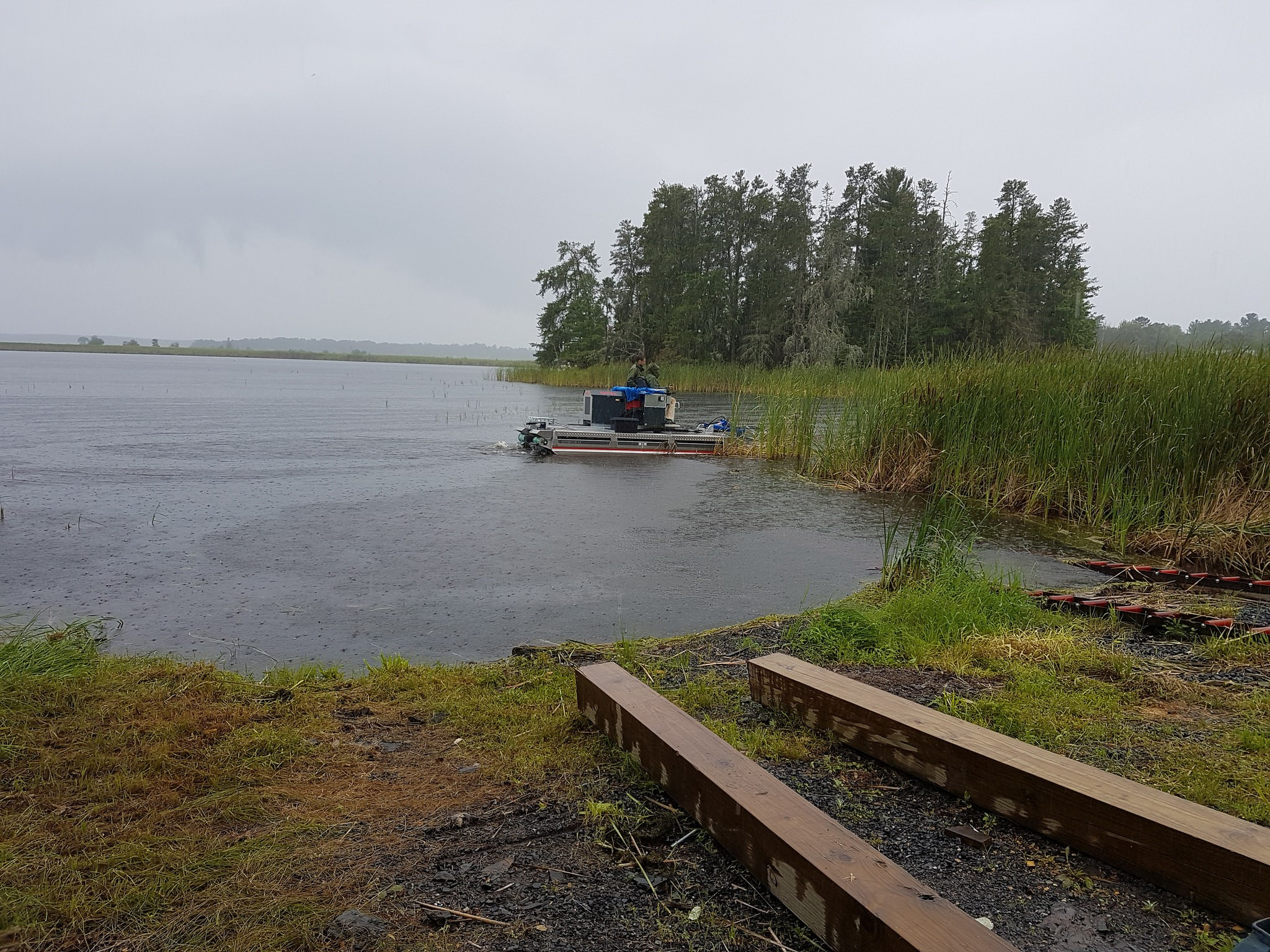 A harvesting machine moves to remove the invasive hybrid cattail plants in Voyageurs National Park August 2017. Credit: IJC