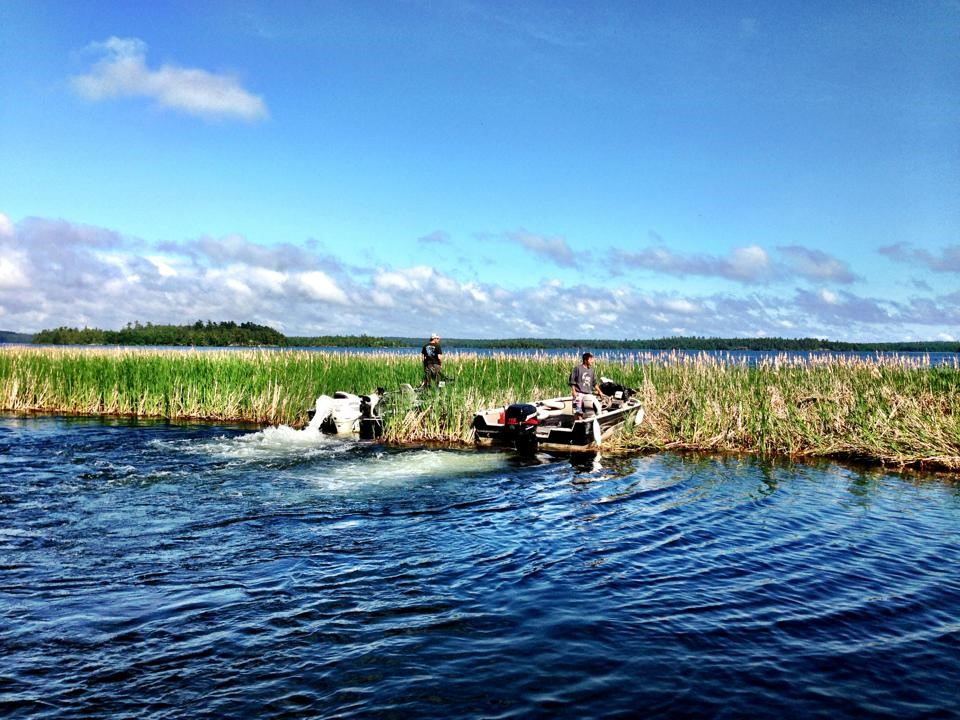 A pair of boaters head into a range of cattails on Rainy Lake. Credit: Eric Olson