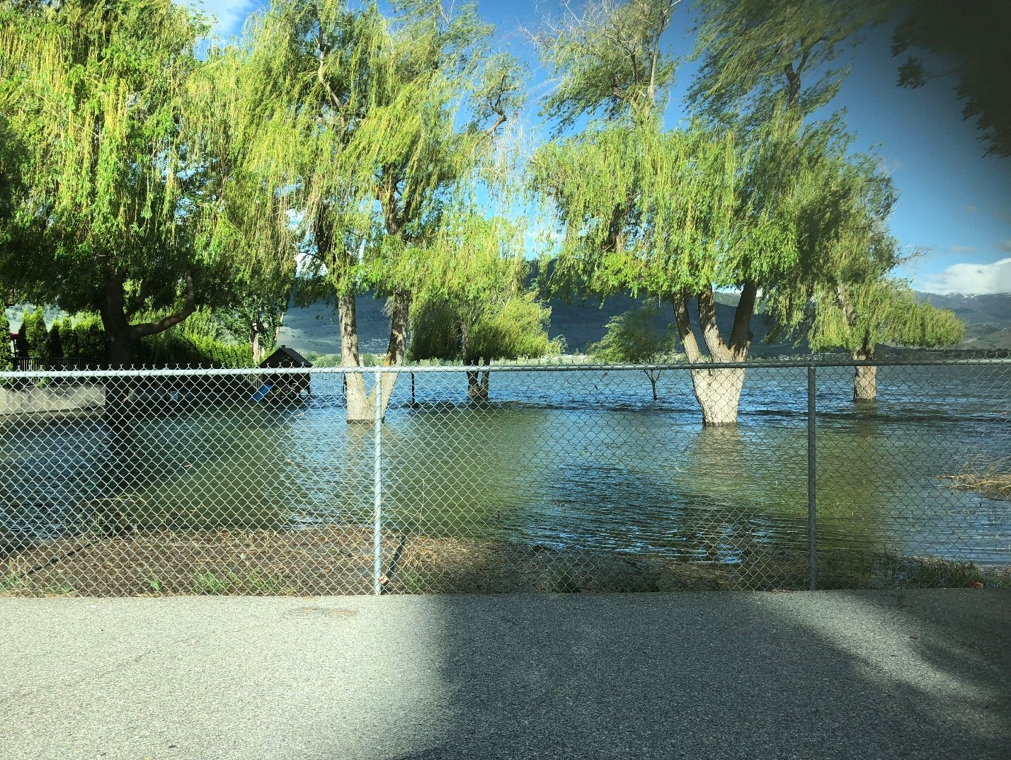Trees in the town of Osoyoos, British Columbia, surrounded by floodwaters on May 15. Credit: Tamara Morgan