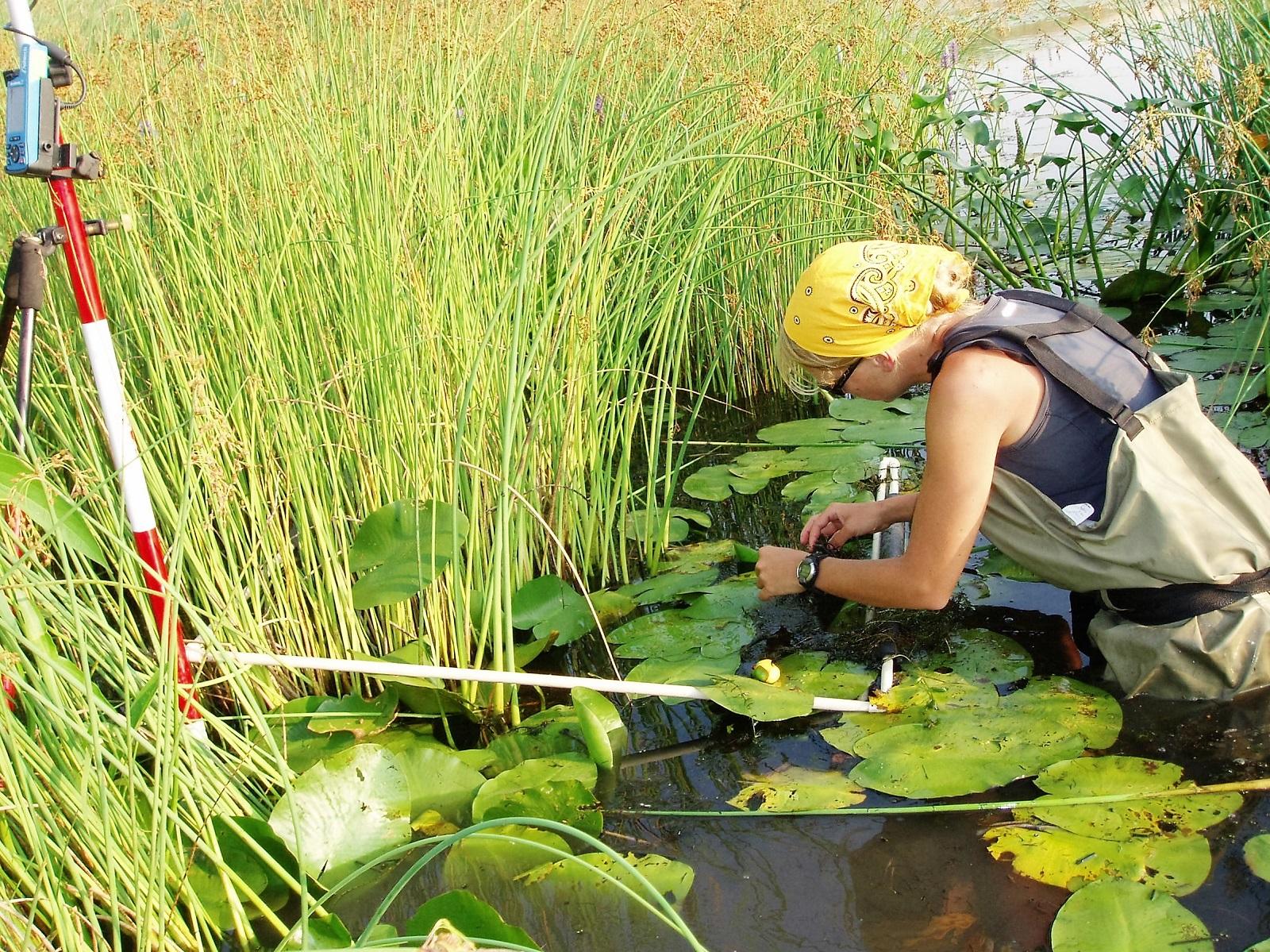 Wetland monitoring. Credit: Environment Canada